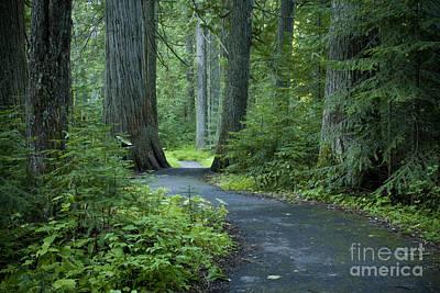 Path Through The Cedars Art Print by Idaho Scenic Images Linda Lantzy