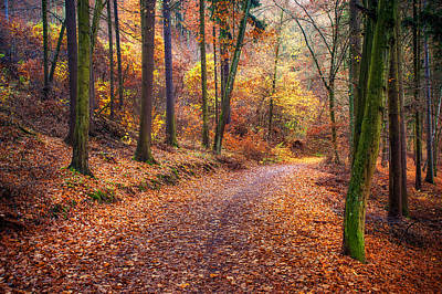 Autumn Scenes Photograph - Path Through The Colorful  Autumn by Jenny Rainbow