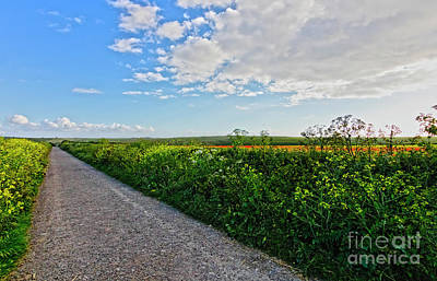 Photograph - Path Through The Fields by Terri Waters