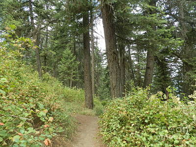 Farmhouse Rights Managed Images - Path through the forest Royalty-Free Image by Margaret Brooks