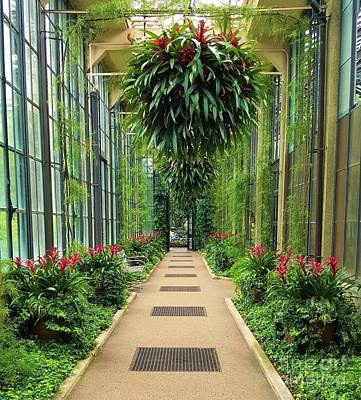 Travel - Path through the Greenhouse by Jessica T Hamilton
