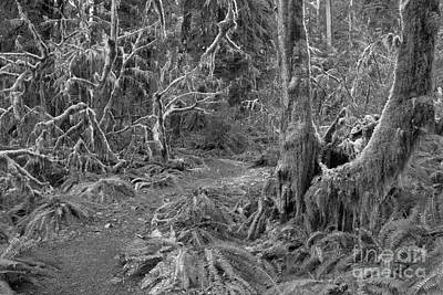 Photograph - Path Through The Hoh Black And White by Adam Jewell