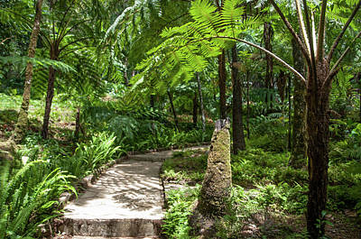 Tropical Ferns Photograph - Path Through The Jungles by Jenny Rainbow