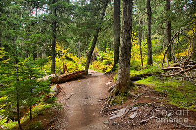 Photograph - Path Through The Mt. Rianier Forest by Adam Jewell