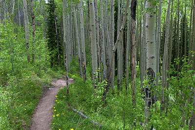 Photograph - Path Through The Summer Aspen by Cascade Colors