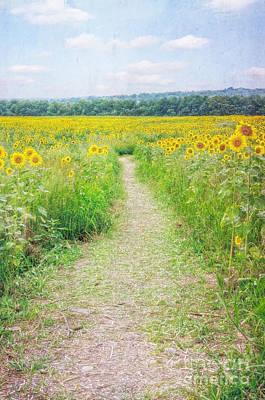 Photograph - Path Through The Sunflowers by Debra Fedchin