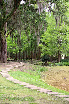 Avery Island Photograph - Path Thru Avery Island La by Chuck Kuhn