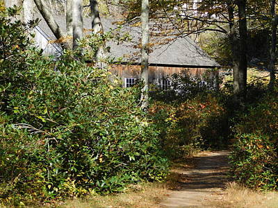 Photograph - Path To An Old Sawmill by Catherine Gagne