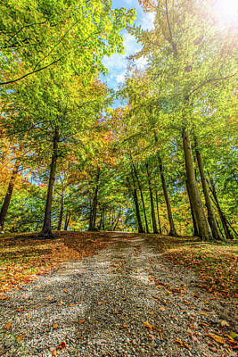 Photograph - Path To Autumn  by John McGraw