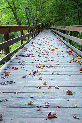 Photograph - Path To Autumn by Karol Livote