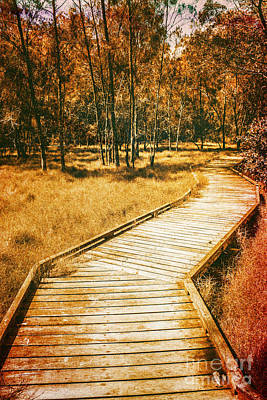 Path To Autumn Marshlands Art Print