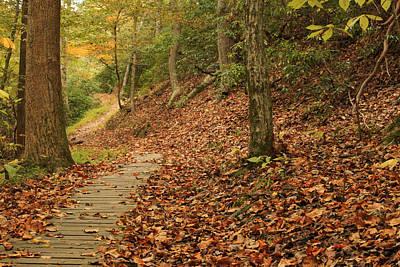 Path To Autumn Art Print