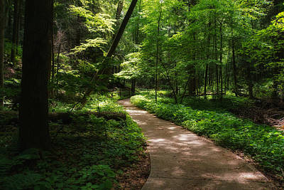 Dappled Light Photograph - Path To Conkle's Hollow by Rachel Cohen