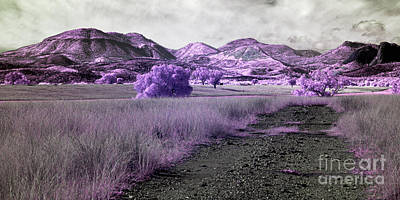 Photograph - Path To Enchantment by Russ Brown