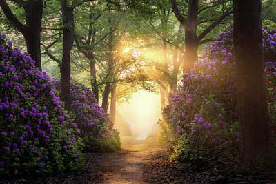 Photograph - Path To Heaven  by Edwin Mooijaart