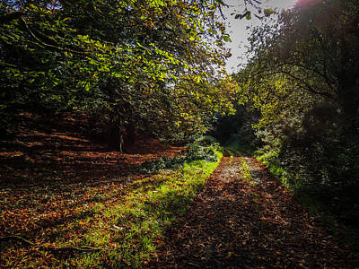 Photograph - Path To Killone Abbey by James Truett