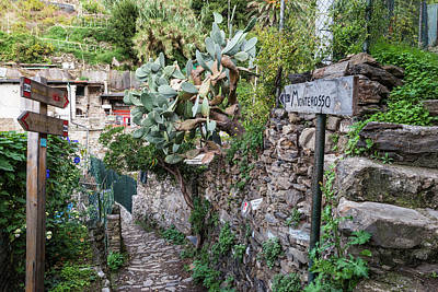 Photograph - Path To Monterosso by Bob VonDrachek