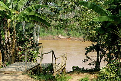 Photograph - Path To The Amazon River by Brandy Little