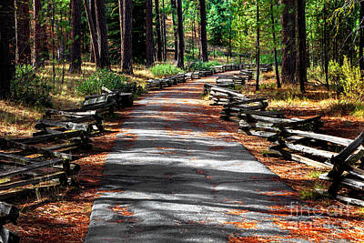 Photograph - Path To The Forest by David Millenheft
