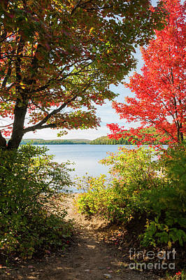 Algonquin Provincial Park Photograph - Path To The Lake by Elena Elisseeva