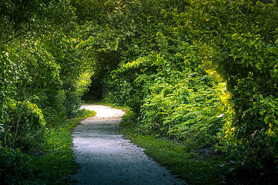 Saw Palmetto Photograph - Path To The Secret Garden by Marvin Spates