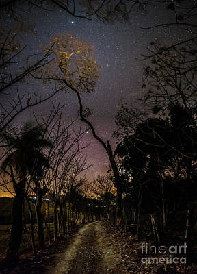 High Iso Photograph - Path To The Stars by Giulio D'Angelo