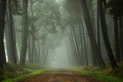 Path To The Unkown II Art Print by Martin Podt