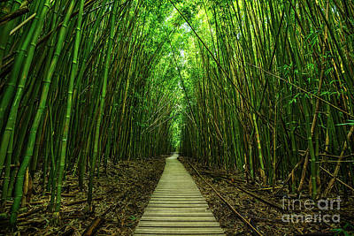 Tree Photograph - Path To Zen by Jamie Pham