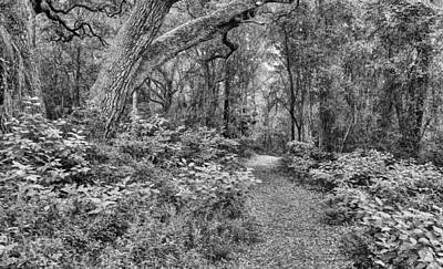 Photograph - Paths Of Life by JC Findley