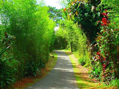 Photograph - Pathway In Baguio, Philippines by Christopher Shellhammer