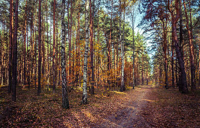 Photograph - Pathway In The Autumn Forest by Dmytro Korol