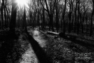 Photograph - Pathway by Jimmy Ostgard