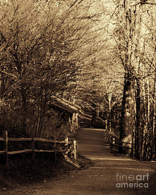 Photograph - Pathway by Mechala Matthews