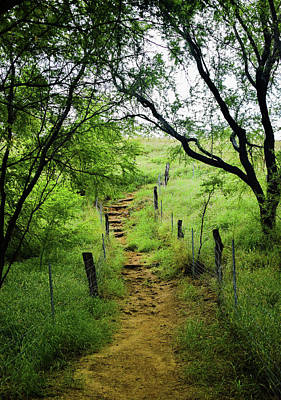 Photograph - Pathway Of Life by Pamela Walton