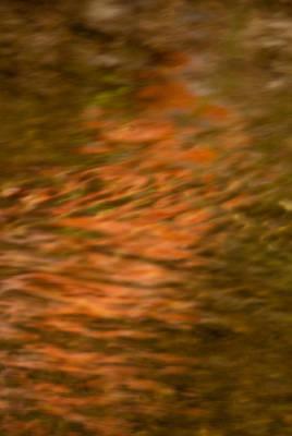 Photograph - Pathway Of Light by Douglas Barnett