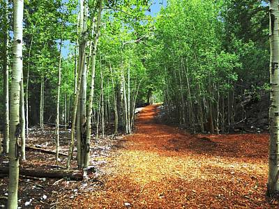 Photograph - Pathway Thru The Aspens by Alan Socolik