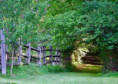 Photograph - Pathway To A Sunny Summer Morning  by Alan Johnson