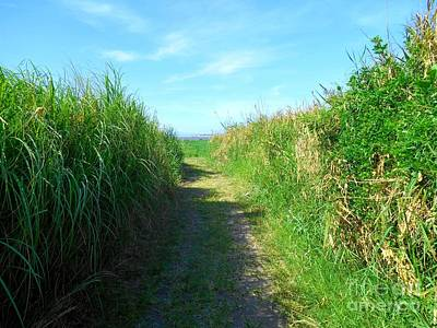 Photograph - Pathway To Laguna De Bay Lake by Christopher Shellhammer