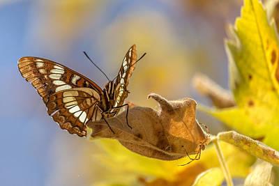 Butterfly Prey Photograph - Patience by Ian Aldridge
