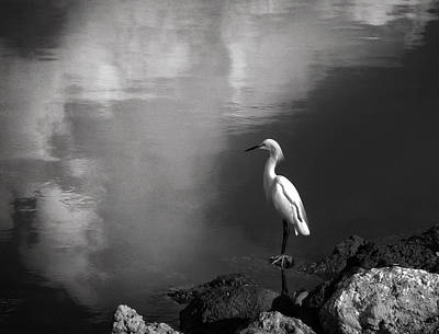 Reflection Photograph - Patience In Black And White by Chrystal Mimbs