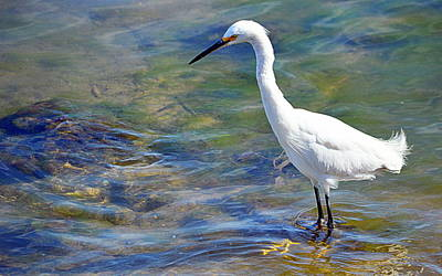 Art Print featuring the photograph Patient Egret by AJ Schibig