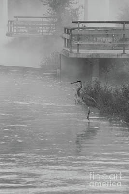 Photograph - Patiently Waiting Grayscale by Jennifer White