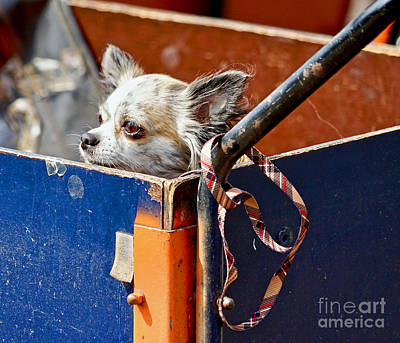 Photograph - Patiently Waiting by Michael Cinnamond