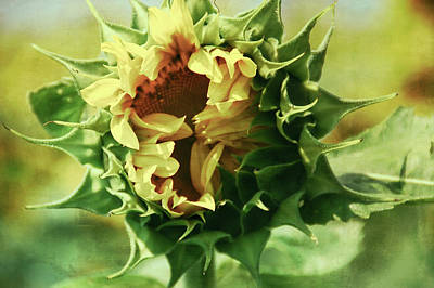Target Threshold Nature - Patina Green Elegant Sunflower by Aimee L Maher ALM GALLERY