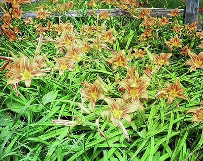 Photograph - Patina Green Field Of Tiger Lilies by Aimee L Maher ALM GALLERY