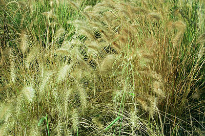 Photograph - Patina Green Summer Wheat by Aimee L Maher ALM GALLERY
