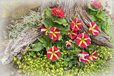 Photograph - Patio Container Garden by Carolyn Derstine