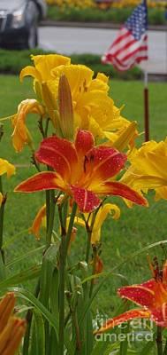 Photograph - Patriotic Daylilies by Lori Kingston