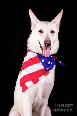 Photograph - Patriotic Dog by Stephanie Hayes