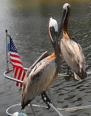 Patriotic Pelicans II Art Print